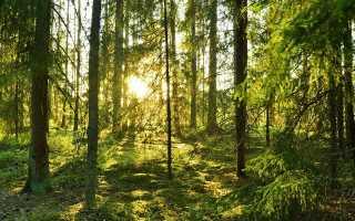 Красота северной природы, или шведский дух в дизайне: уникальный особняк в хельсингборге, швеция
