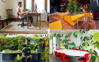 Новые идеи для озеленения офисов, домов и улиц
